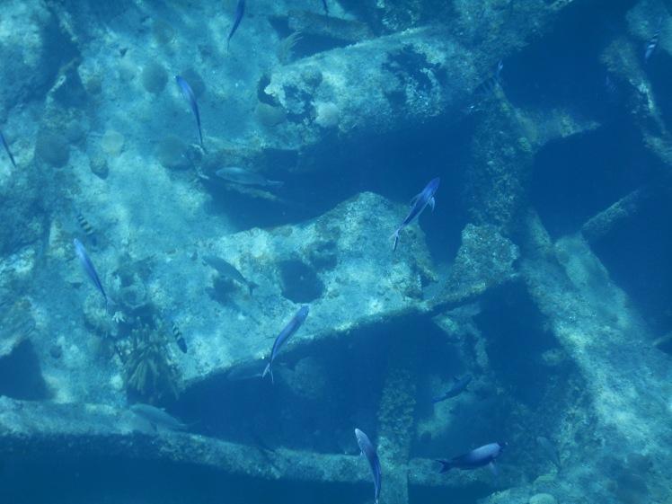 Close up of fish 2