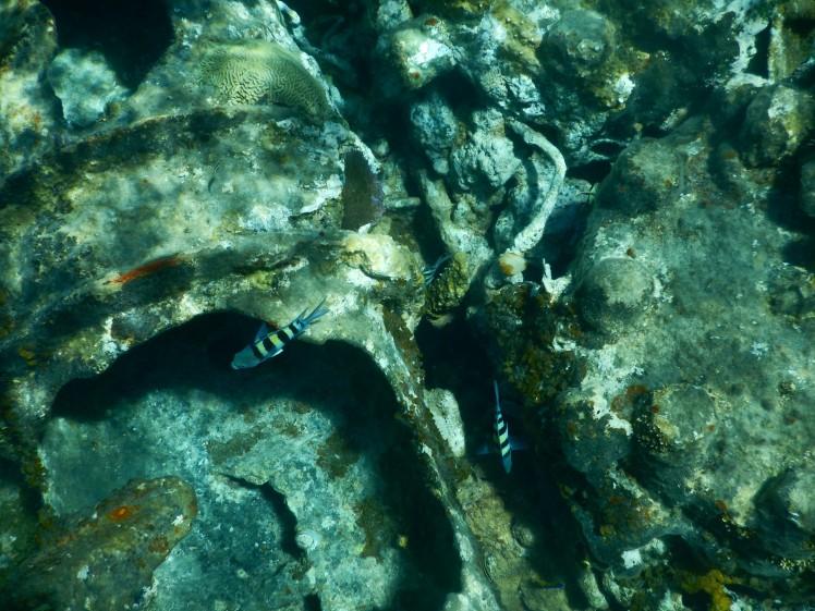 Close up of fish 3